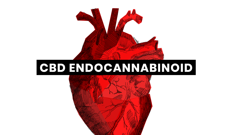 CBD Endocannabinoid